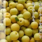 「七折小梅」はフルーツだ。
